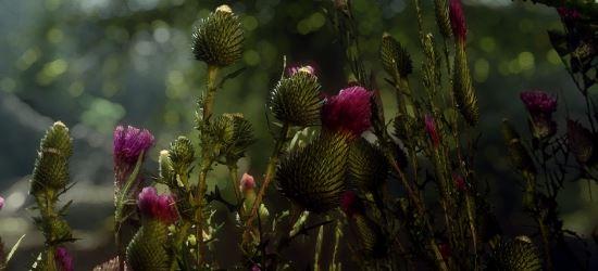 Thistle by Mari - Чертополох от Мари v 1.1 для TES V: Skyrim